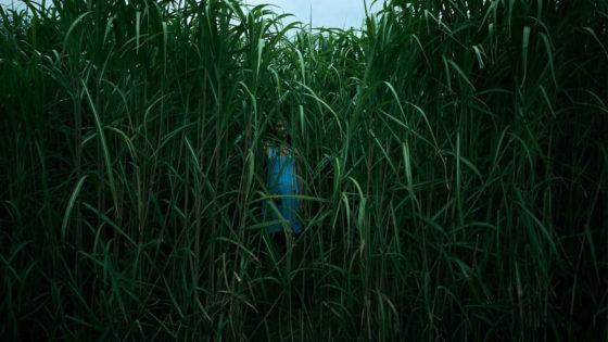 Nell'erba alta